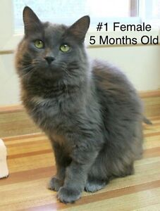 Fur Babies! Spayed/Neutered, Vaccinated, Dewormed!