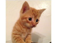 Mix litter of kittens