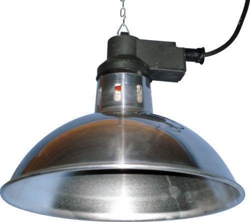 Dog Heat Lamp Ebay