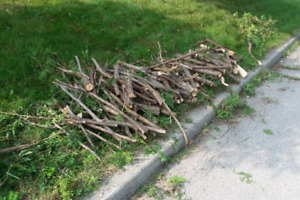 Free cedar wood and branches