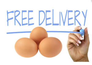 Organic DUCK and CHICKEN eggs! FREE delivery!!