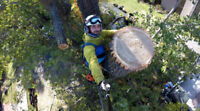 TREE TECH Arboreal Services