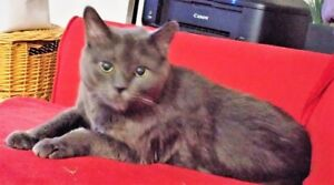 8 YR OLD MALE NEUTERED HOUSE CAT