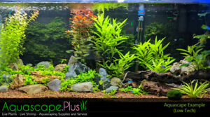 Live Tropical Aquarium Plants and Neocaridina Shrimp For Sale