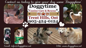 Dog Boarding with Doggytime Canine Care & Rescue