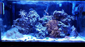 New saltwater fish/reef tank group for quinte/kingston  area