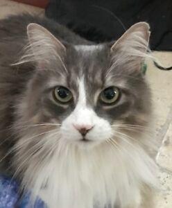 SOS Perdue depuis le 6 Avril Chat Perdu chatte perdue
