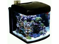 Fish tank with built in filter