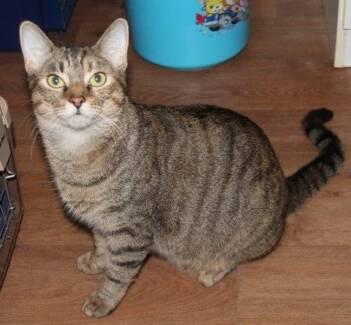 Little Paws Kitten Rescue - Sherry Mount Gravatt Brisbane South East Preview