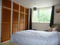One large,light,furnished double bedroom in share house. muller rd eastville