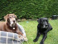 Loving pet care & dog walking
