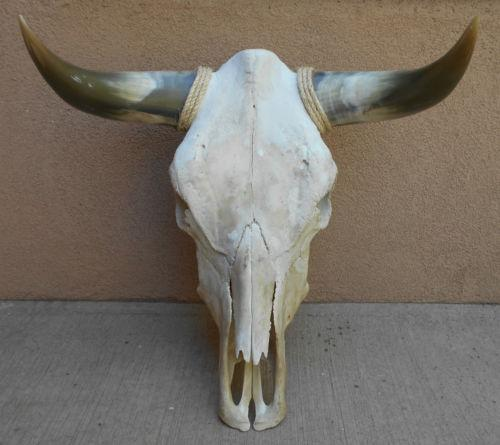 Longhorn Cow Skull Car Interior Design