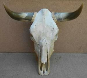 Cow Skull Taxidermy Ebay