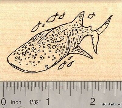 Whale Shark Rubber Stamp Reef Fish J14414  WM