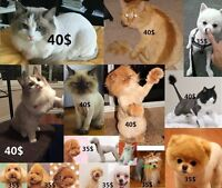 Pet Grooming dog 35$ ,,Cat 40$ .No Water,No bath