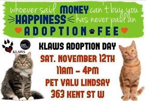 KLAWS: Adoptathon November 12th, 11 AM until 4 PM, Lindsay!