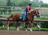 3 Year old Registered Thoroughbred Chestnut Filly