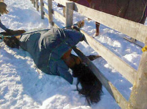 Equine Emergency First Aid Clinic November 19/17 Langley BC