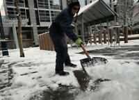 Snow Shovelers Wanted