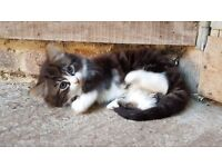 Kittens - good natured, active and ready now