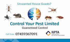 Mice bedbugs Cockroaches Rats pest exterminator pest control low price 24/7 London quick control