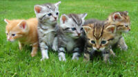 Kitchener Kitty Meetup for Cat Lovers!!!