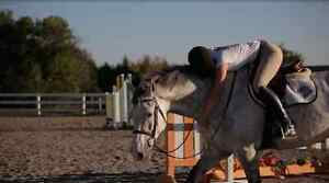 Horseback riding lessons, Laser Therapy, Indoor/Outdoor Board Kawartha Lakes Peterborough Area image 3