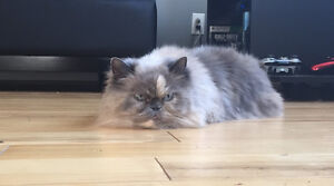 LUCY IS MISSING Kitchener / Waterloo Kitchener Area image 1