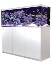 Red Sea Reefers Back in Stock! Lonsdale Morphett Vale Area Preview