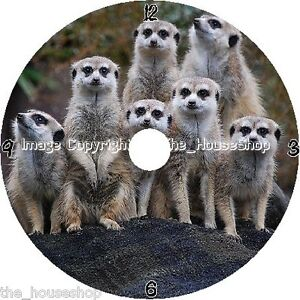 MEERKAT DESIGN CD/DVD SIZED QUARTZ WALL CLOCK WITH A DESK STAND AND FREE BATTERY