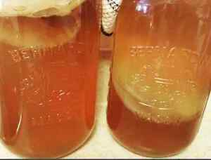 Kombucha scoby for sale