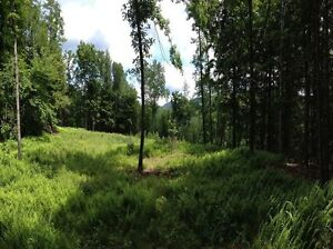LAND FOR SALE IN WESTMORLAND JAMAICA