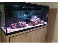 Aquarium (freshwater/marine)