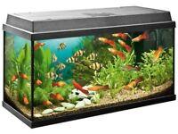 Juwel 90 / 100 litres fish tank aquarium duolux 80 hood filter heater ornaments