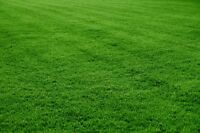 Residential lawn cutting