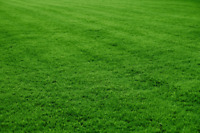 Affordable, Ecofriendly lawn mowing