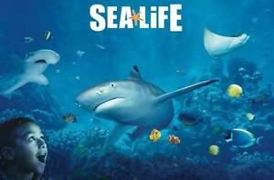 Sealife Aquarium Ticket for Child or Adult Maitland Maitland Area Preview