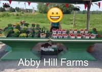 Abby Hill Farms - Summer Jobs