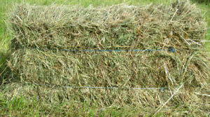 Total Grass Hay