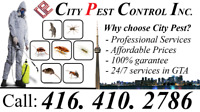 Pest Control services in GTA -City Pest Control (416 410 2786)