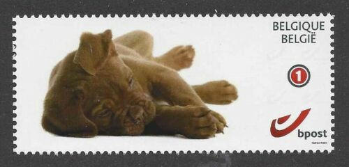 Dog Photo Full Body Study Portrait Postage Stamp DOGUE DE BORDEAUX Puppy MNH