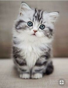 ISO: Kitten for Xmas