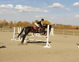 Highly experienced horse trainer/ exerciser