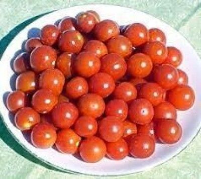 - 30 LARGE RED CHERRY TOMATO 2019 (all non-gmo heirloom vegetable seeds!)