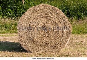Round bales of hay for sale