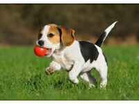 Dog Walking / Pet Sitting / Pet Taxi /Dog Boarding Covering Bearsden,Gartmore & Surrounding Areas