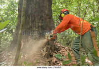 Tree Service Specialist