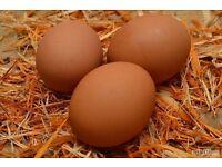 Fresh Free Range Chicken Eggs