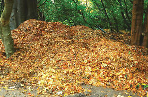 FALL IS COMING! ARRANGE YOUR LEAF REMOVAL TODAY!
