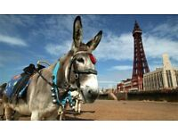 Summer holiday 3,4 &7 night caravan breaks at Havens Cala Gran Park near Blackpool